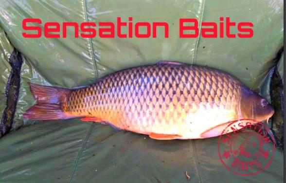Sensation Baits bojli